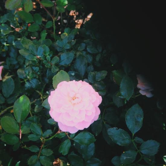 dwprettyflower